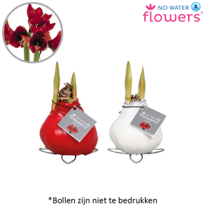 Wax Amaryllis mini (1)